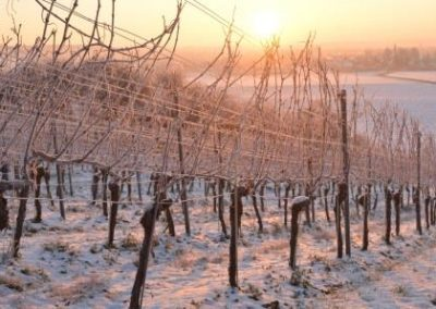 Wein,winter,