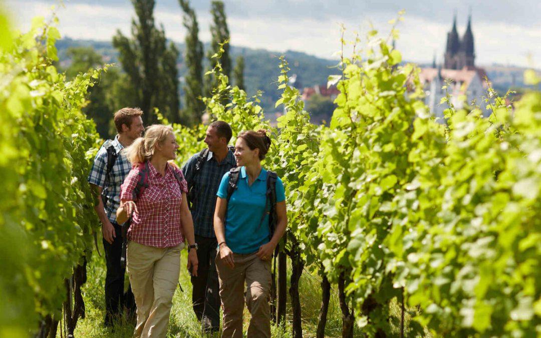 AudioGuide zum sächsischen Weinwanderweg